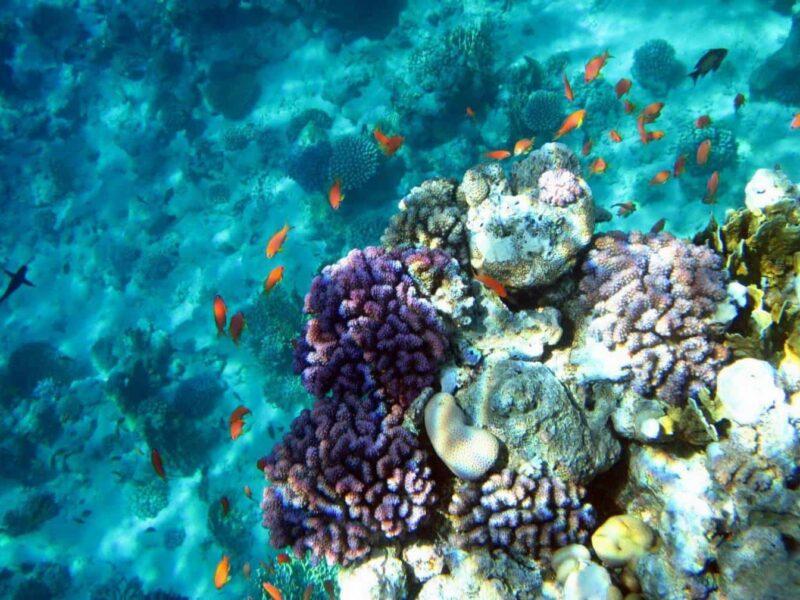 Белый остров Рас мохаммед